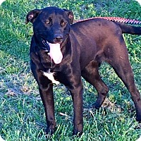 Adopt A Pet :: Skyy - St. Catharines, ON