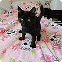 Adopt A Pet :: Maisy - Phoenix, AZ