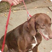 Adopt A Pet :: GRACIE - Wakefield, RI