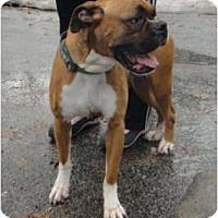 Adopt A Pet :: China - Grafton, MA