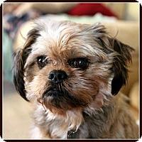 Adopt A Pet :: STAVROS - ADOPTION PENDING - Seymour, MO