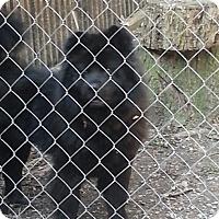 Adopt A Pet :: Pepita - Tillsonburg, ON