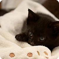 Adopt A Pet :: Teddie - Reston, VA