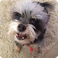 Adopt A Pet :: FeeFee - Scottsdale, AZ