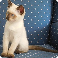 Adopt A Pet :: Crystal - Davis, CA