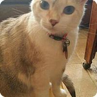 Adopt A Pet :: Meow Meow - Pasadena, CA