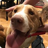 Adopt A Pet :: Hooper - Hainesville, IL