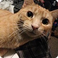 Adopt A Pet :: Garfield - Middletown, OH