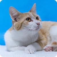 Adopt A Pet :: Juliet - Houston, TX