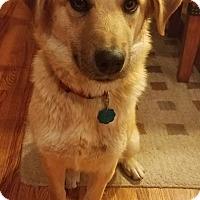 Adopt A Pet :: Sealy - Erie, CO