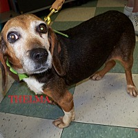 Adopt A Pet :: THELMA - Ventnor City, NJ