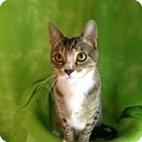 Adopt A Pet :: Griffin - Randleman, NC