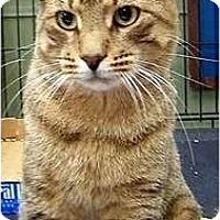 Adopt A Pet :: Junkmail - Alexandria, VA
