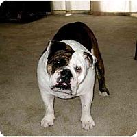 Adopt A Pet :: Monster*adoption pending* - Gilbert, AZ