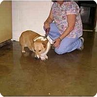 Adopt A Pet :: Toby - Inola, OK