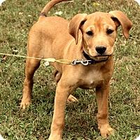 Adopt A Pet :: Brewster - Brattleboro, VT