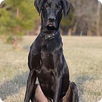 Adopt A Pet :: Sampson - Manassas, VA