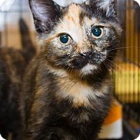 Adopt A Pet :: Ginger - Irvine, CA