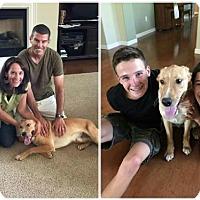 Adopt A Pet :: Blaze - Sacramento, CA