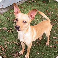 Adopt A Pet :: Tony - Surrey, BC