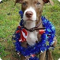 Adopt A Pet :: Raja Gemini - Greensboro, NC