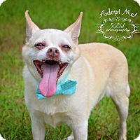 Adopt A Pet :: Poof - Fort Valley, GA