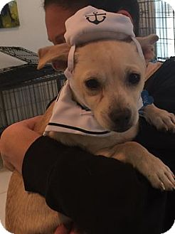 Terrier (Unknown Type, Small) Mix Puppy for adoption in Saddle Brook, New Jersey - Evan