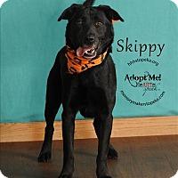 Adopt A Pet :: Skippy - Topeka, KS