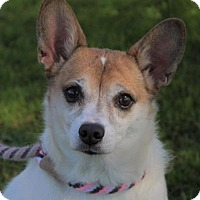 Adopt A Pet :: BRIDGET:Lower Fees-Altered - Red Bluff, CA