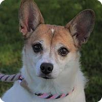Adopt A Pet :: BRIDGET:Lower Fees-Altered - Red Bluff, CA