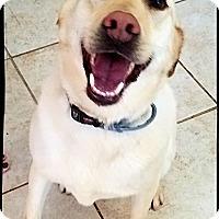 Adopt A Pet :: Bella - Bastrop, TX
