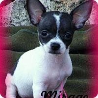 Adopt A Pet :: Mirage - Anaheim Hills, CA