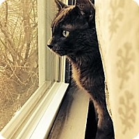 Adopt A Pet :: Bruce - St. Paul, MN