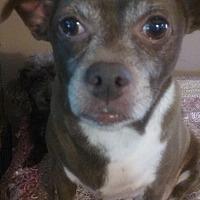 Adopt A Pet :: Ringo Bear - Homer, NY