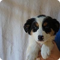 Adopt A Pet :: Ada - Oviedo, FL