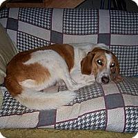Adopt A Pet :: Sam - Rustburg, VA
