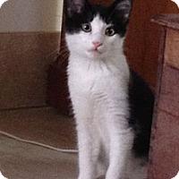 Adopt A Pet :: Carl - Naples, FL
