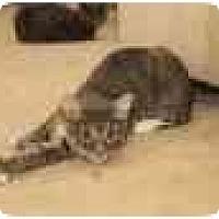 Adopt A Pet :: Trekie - Naples, FL