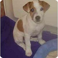 Adopt A Pet :: Scotty - Miami, FL