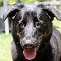 Adopt A Pet :: Julio - Rossville, TN