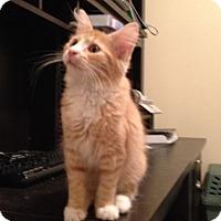 Adopt A Pet :: Annie - Pittstown, NJ