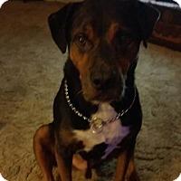 Adopt A Pet :: Jake - Indian Trail, NC