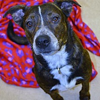 Adopt A Pet :: Romeo - Beaumont, TX