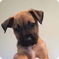 Adopt A Pet :: Maddie - Ft. Lauderdale, FL