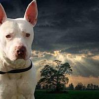 Adopt A Pet :: KEANU - Fairfield, CA