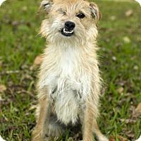 Adopt A Pet :: Hazel- so much love to give--N - Santa Fe, TX