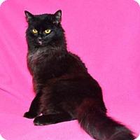 Adopt A Pet :: Gina - Very Fancy Girl - Buford, GA