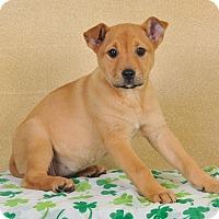 Adopt A Pet :: Ethel - Colmar, PA