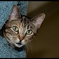 Adopt A Pet :: Cathy - Brick, NJ
