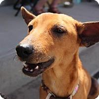Adopt A Pet :: Matai - Littleton, CO